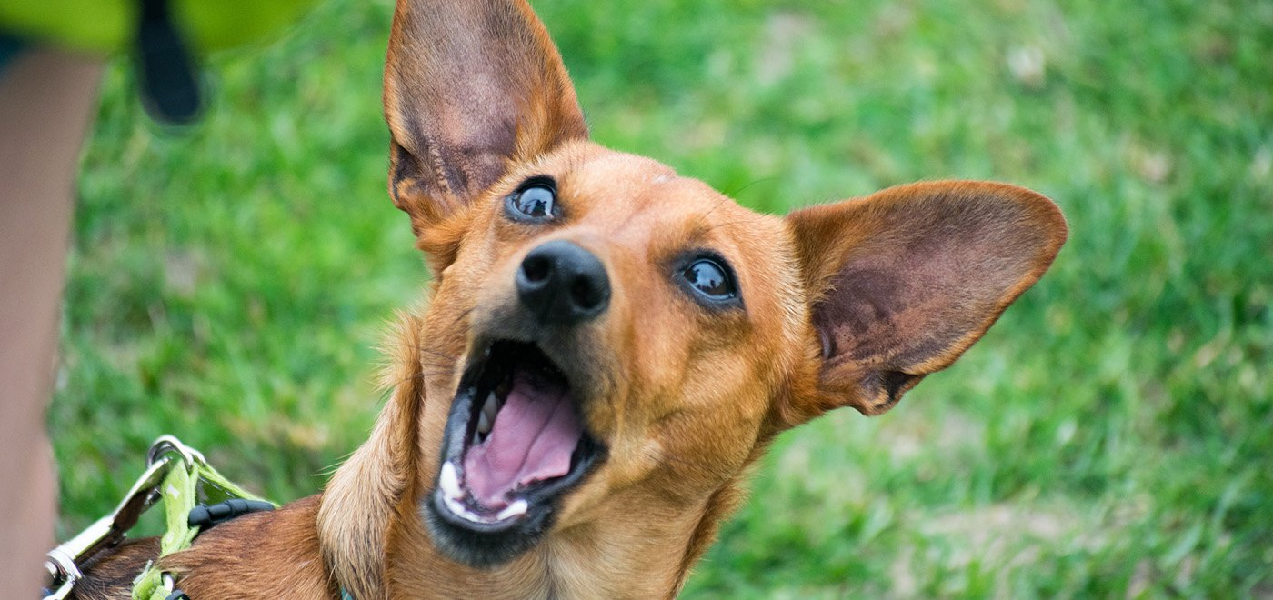 Dog Food Sales To Help Spay Neuter